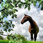 Mr Horse by David  Parkin