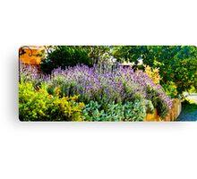 South Australia - CrabTree Vineyard - Lavender garden Canvas Print