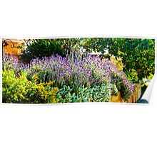 South Australia - CrabTree Vineyard - Lavender garden Poster
