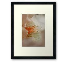 Pretty Peach Framed Print