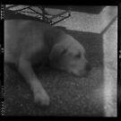 good dog by Soxy Fleming