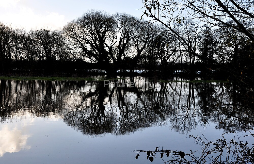 Cork Flooded 1 by Pat Herlihy