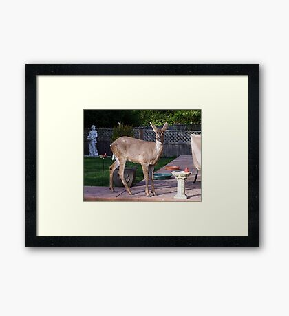 There's a Deer in my Bird-Bath Framed Print