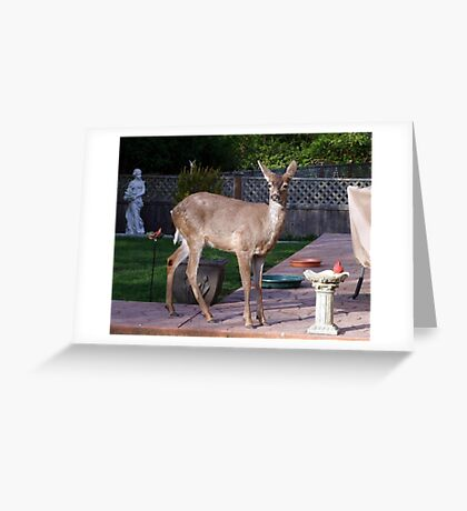 There's a Deer in my Bird-Bath Greeting Card