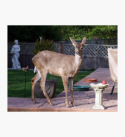 There's a Deer in my Bird-Bath Photographic Print