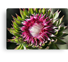 Musk Thistle in Grand Tetons Canvas Print