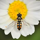Hoverfly in the feverfew by Edge-of-dreams