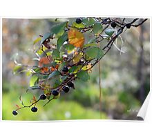Just a touch of Autumn - Sparkleberries Poster