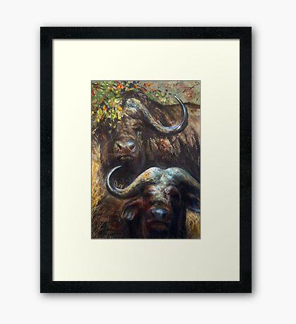 Kruger Park Buffalo Framed Print