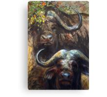 Kruger Park Buffalo Canvas Print