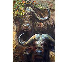 Kruger Park Buffalo Photographic Print