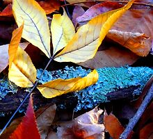 Autumn contrasts by Tamara Travers