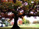 Under The Mighty Oak Tree by NatureGreeting Cards ©ccwri