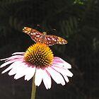 From a Butterfly's Eye by grayjenny