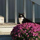 A Fall Cat.... by Larry Llewellyn