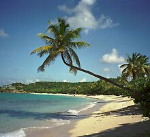Galley Bay, Antigua by Barrie Turpin