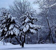 Winter wonderland  by Earl McCall