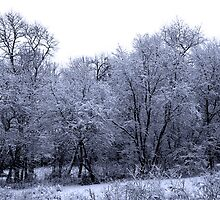 Remnants of winters past 2 by Earl McCall