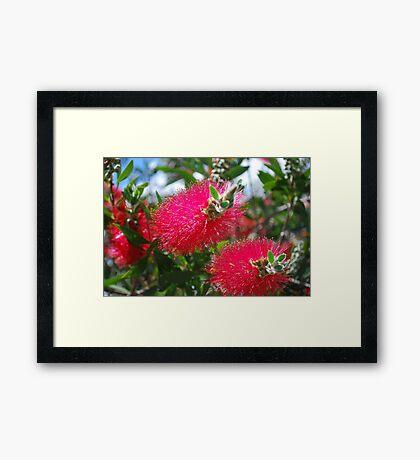 Aussie G'Day Framed Print