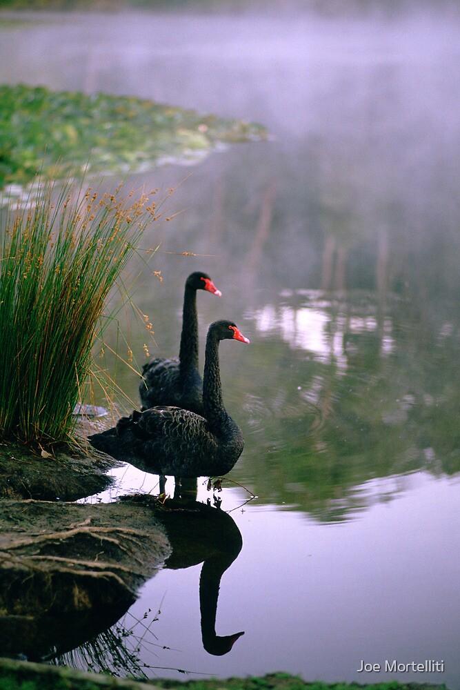 Lake Side,Jubilee Lake by Joe Mortelliti
