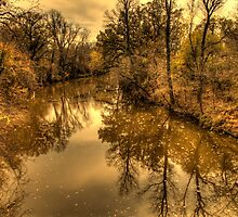 Floating Leaves by Terence Russell