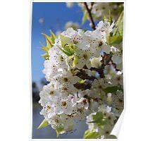 Blossum at the Lake Poster