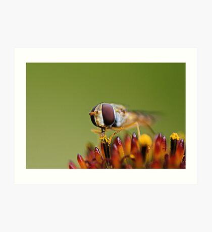 Balancing Hoverfly Art Print