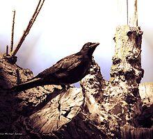 il est Naturelle by David Jason Michael Jordan