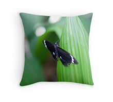 Black butterfly - Melbourne zoo Throw Pillow