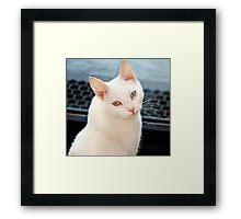 jules posing Framed Print
