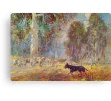 Fred the Kelpie - Driving the Flock Canvas Print