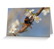 Buff-tailed Bumblebee (Bombus terrestris) On A Spring Blossom Greeting Card