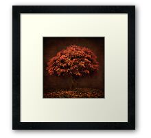 The Tree that knew me Framed Print