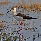 Juvenile Black-winged Stilt by Hugh J Griffiths