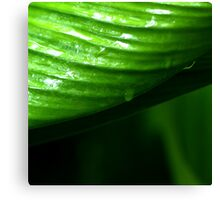 Photography of cardamon leaves Canvas Print