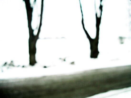 Winter Trees by Daniel Weeks