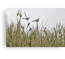 Azure-winged Magpies Canvas Print