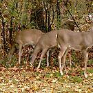 Deer Company in NJ by Monica Engeler