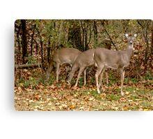 Deer Company in NJ Canvas Print