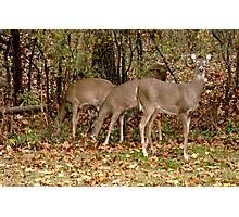 Deer Company in NJ Photographic Print