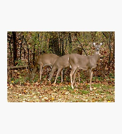 Deer Company in NJ Photographic Print