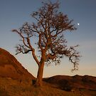 Hawthorn tree in the dead of winter by Rory Trappe