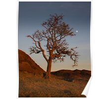 Hawthorn tree in the dead of winter Poster