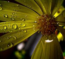 laden petal by Daniel Weeks