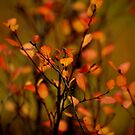 Kaleidoscope of Color by Betsy  Seeton