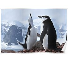 Chinstrap pinguins Poster