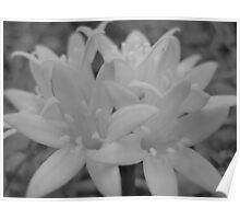 Black and White Backyard Flowers Poster
