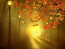 Into The Light by Igor Zenin