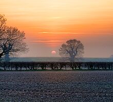 Last Summer Sun by Mark Snelling