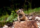 Now Where Did I Put That Nut? by Betsy  Seeton